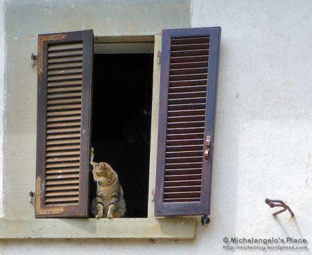 gatto in finestra